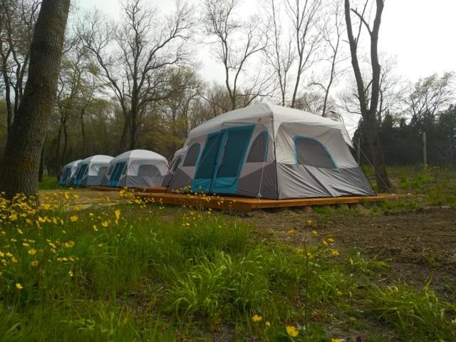 Палатки под наем
